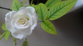 Weißrosenmakrohintergrund Stockbild