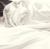 Weißrosennahaufnahme als Hintergrund Im Sepia getont Retro- Art Stockfotografie