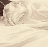 Weißrosennahaufnahme als Hintergrund Im Sepia getont Retro- Art Lizenzfreies Stockbild
