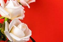 Weißrosennahaufnahme kann als Hintergrund verwenden Weicher Fokus Lizenzfreies Stockfoto