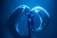 Weißwalshow lizenzfreies stockbild