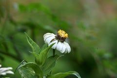 Weiße Blumen, die im regnerischen blühen stockfotografie