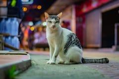 Weiße Katze mit grauen Stellen sitzt auf der Straße spät am Abend, die Stadtlichter im Hintergrund, die Katze hat schönes grünes  stockfotos