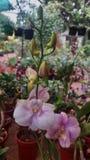 weiße Orchideenblume in einem Garten stockbild