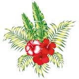 Weißer Hintergrund der tropischen mit Blumenzusammensetzung lizenzfreie abbildung
