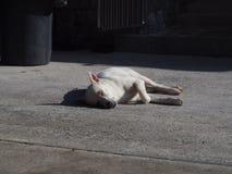 Weißer Hund, der auf konkretem Boden schläft, um die Wärme der Morgensonne des Tages zu empfangen lizenzfreies stockfoto