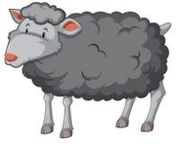 Weißhintergrund der schwarzen Schafe vektor abbildung