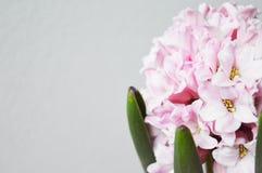 Wei?e Blume im Wald lizenzfreies stockfoto