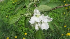 Wei?e Blumen im Stadtgarten stockbilder