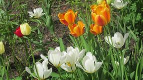 Wei?e Blumen im Stadtgarten lizenzfreie stockbilder