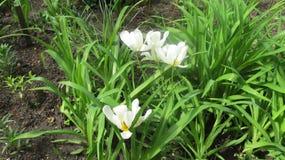 Wei?e Blumen im Stadtgarten lizenzfreies stockbild