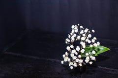 Wei?e kleine Wildflowers lizenzfreie stockfotografie