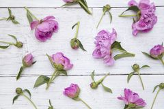 Wei?e und rosa Pfingstrosen lizenzfreies stockbild