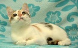 Weiß mit rotem und braunem Kätzchen Lizenzfreie Stockfotografie