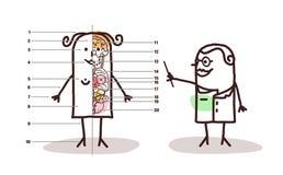Weibliche Anatomielektion der Karikatur Stockfotografie