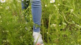 Weibliche Beine in den Turnschuhen, die auf Gänseblümchenfeld am Sommertag gehen Junge Frau, die an durch blühende Gänseblümchenb stock footage