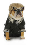 Weibliche Bulldogge Lizenzfreie Stockfotos