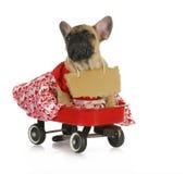 Weibliche Bulldogge Lizenzfreie Stockfotografie