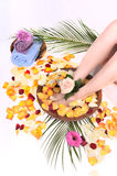 Weibliche Füße im Fußbadekurort rollen mit Blumen, Blumenblätter Lizenzfreies Stockbild