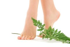 Weibliche Füße mit grünem Blatt Lizenzfreie Stockfotografie