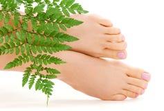 Weibliche Füße mit grünem Blatt Lizenzfreies Stockfoto