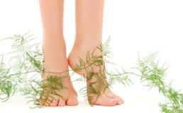 Weibliche Füße mit Grünpflanze Stockfoto