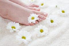 Weibliche Füße mit weißen Gänseblümchen. lizenzfreie stockbilder