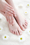 Weibliche Füße mit weißen Gänseblümchen. Stockfoto