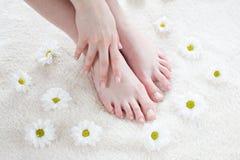 Weibliche Füße mit weißen Gänseblümchen. Stockbilder