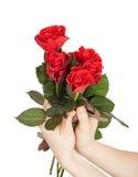 Weibliche Hände, die Blumenstrauß von roten Rosen halten Lizenzfreie Stockbilder