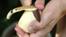 Weibliche Hände, die nahes hohes der Kartoffel abziehen Langsame Bewegung stock video
