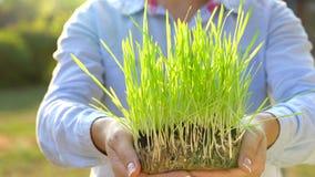 Weibliche Hände halten heraus Handvoll Boden mit grünem Gras Konzept des Wachstums, Sorgfalt, Nachhaltigkeit, die Erde schützend stock video footage