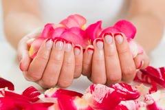 Weibliche Hände mit dem Nagel-Lack, der Rose Petals hält Stockbilder