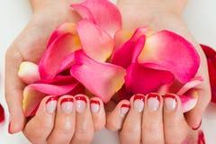 Weibliche Hände mit dem Nagel-Lack, der Rose Petals hält Stockfotos
