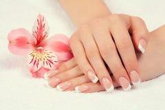Weibliche Hände mit französischer Maniküre stockfotos
