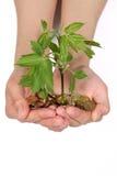 Weibliche Hände mit Münzen und einem grünen Sprössling Lizenzfreie Stockfotos