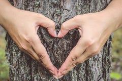 Weibliche Hände mit Maniküre auf dem Baum Hände, die ein Herz SH machen Stockfotografie