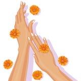 Weibliche Hände und Calendula-Blumen Lizenzfreies Stockfoto