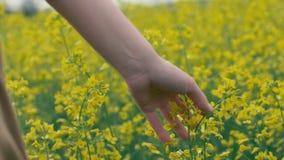 Weibliche Hand berührt gelbe Blumen Rührende schöne gelbe Blumen der Frau stockfoto