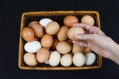 Weibliche Hand, die eine Hühnerei von einem Korb auf einem schwarzen Hintergrund nimmt lizenzfreie stockbilder