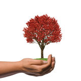 Weibliche Hand, die einen großen roten Baum anhält Stockfotos