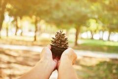 Weibliche Hand mit einem Tannenzapfen Lizenzfreies Stockfoto