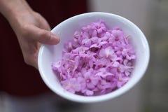 Weibliche Hand mit einer Porzellanschale gefüllt mit den Blumenblättern stockfotos