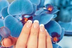 Weibliche Hand mit französischer Maniküre lizenzfreie stockfotografie