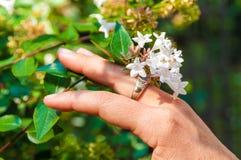Weibliche Hand mit weißen Blumen lizenzfreie stockfotos