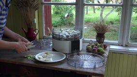 Weibliche Hand schnitt frische Birne für Trockner in der ländlichen Innen Küche 4K stock video footage