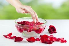 Weibliche Hand, Wasser-Tropfen und Rosen-Blumenblätter Lizenzfreie Stockfotografie