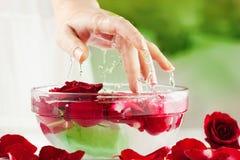 Weibliche Hand, Wasser-Tropfen und Rosen-Blumenblätter Lizenzfreies Stockfoto