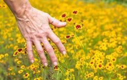 Weibliche Handbürstende Wildflowers Stockbild