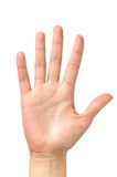 Weibliche Handpalme getrennt Lizenzfreies Stockfoto